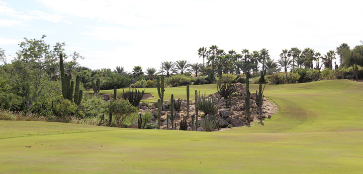 Best Cabo Golf Review Picture